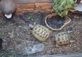 minizoo żółwie
