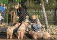 poznanie i karmienie  zwierząt gospodarskich (świnki, króliki, cielczki, krówki, konie)