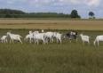 kozy - mleko i sery